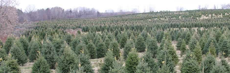 Prestonvale Tree Farms